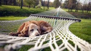 dog-resting-in-a-hammock-20229-1366x768