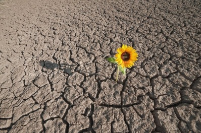 6898739-dry-soilof-a-barren-land-and-single-growing-plant