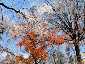 Autumn.WinterTrees