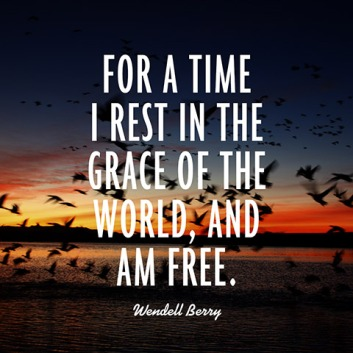 quotes-rest-grace-wendell-berry-480x480