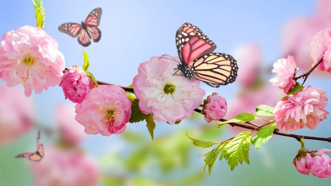 spring-nature-wallpapers-1