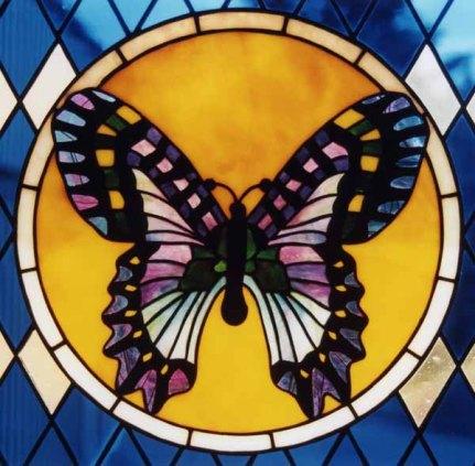 butterfly_closeup