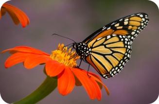 ButterflySymbolismInTarot