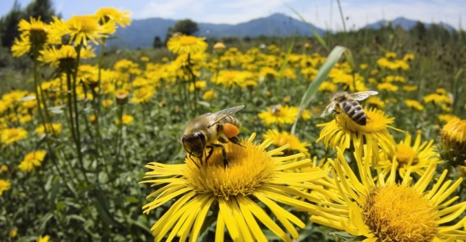 Bay-Nature-bees-960x500
