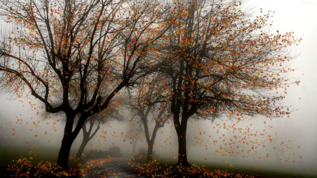 falling-into-winter-autumn-fall-fog-trees-widescreen