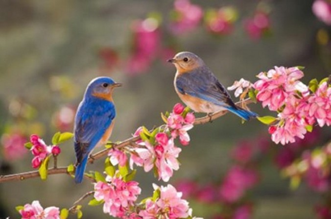 birds-feathered-friends-enjoying-spring-flowers-animals-birds-blossoms-nature-picture-gallery-736x487